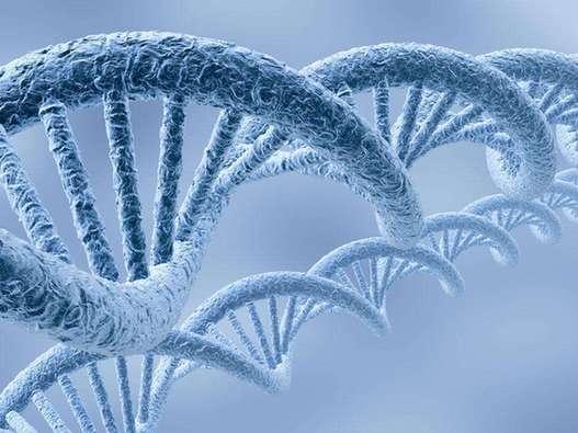 基因——生物发育的调控者