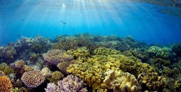 海洋科考之资源调查