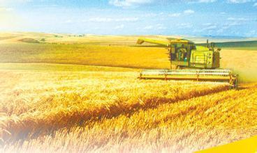 中国农业的现代化路在何方?