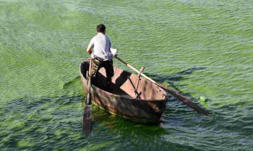"""""""以渔控藻""""改善水环境质量"""