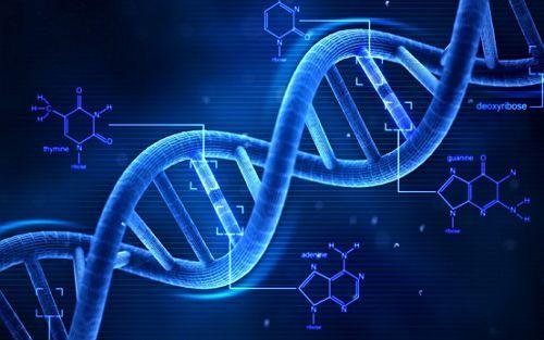 人类遗传学疾病的探研