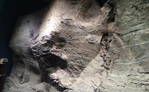 地质年代是如何划分的?