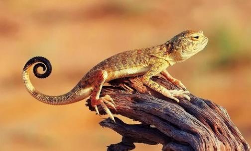 蜥蜴与蝾螈你能分清楚吗?