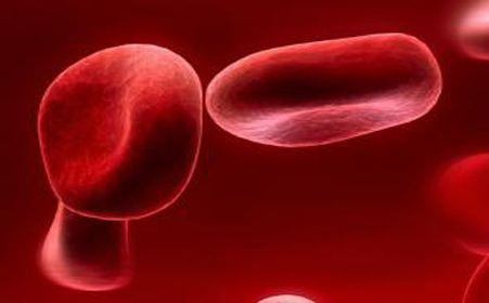 遗传病——地中海贫血