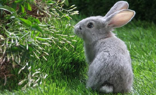 兔子的眼睛都是红色吗?真相解读来了