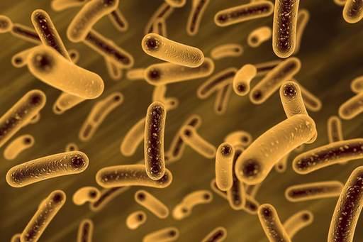 走进微生物资源前期开发国家重点实验室