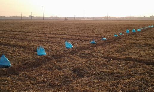 在农业生产中为何要对农作物合理施肥?