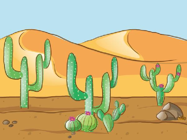 奇瓦瓦沙漠你了解吗?它的降水来自哪里?