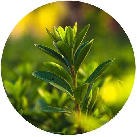 植物生物学的奥秘