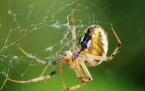 蜘蛛网的形状都一样吗?