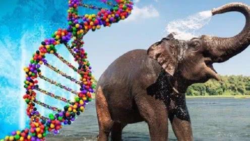 大象长寿又不得癌症的秘密