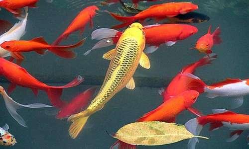 鱼在水里喝水吗?