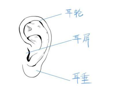 耳朵:五官里最怕冷的器官