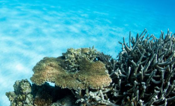 港科大发现7000多种新海洋微生物 有助研发新型抗生素