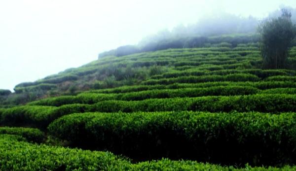 走进茶树生物学与资源利用国家重点实验室
