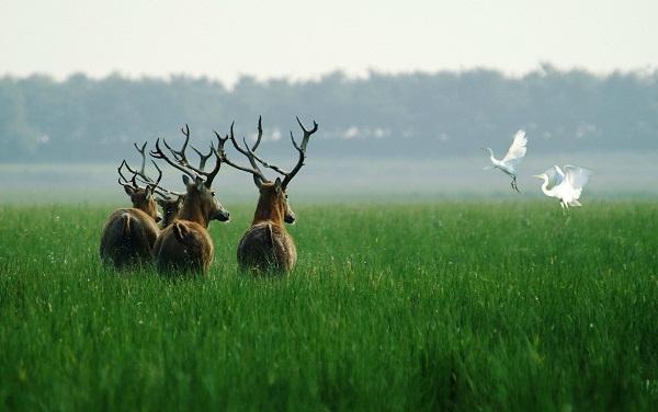 守护珍稀动物