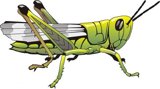 康乐院士——破解蝗虫聚集成灾之谜