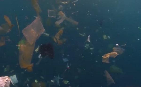 李道季:海洋微塑料危害不容忽视