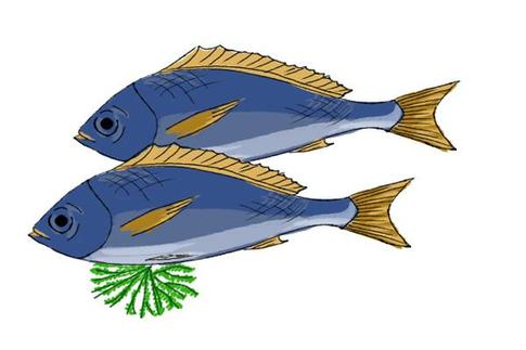鱼肚中黑色的膜是污染的标志吗?