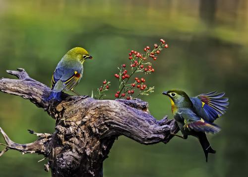 鸟类眼睛的秘密