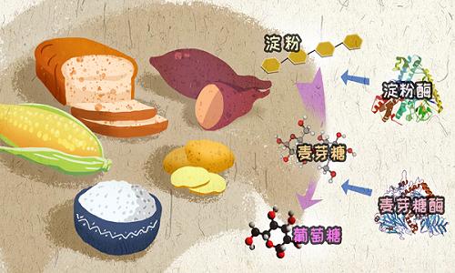 食物中的淀粉三问