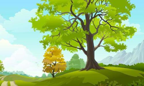 树干为什么是圆的?