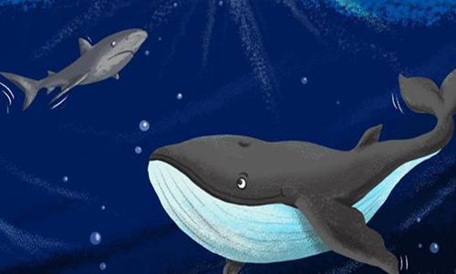 小鱼鳍有哪些大智慧?