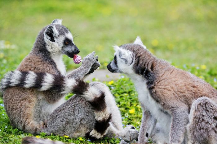 法国家科学研究中心警告:破坏野生动植物世界会增加跨物种污染风险