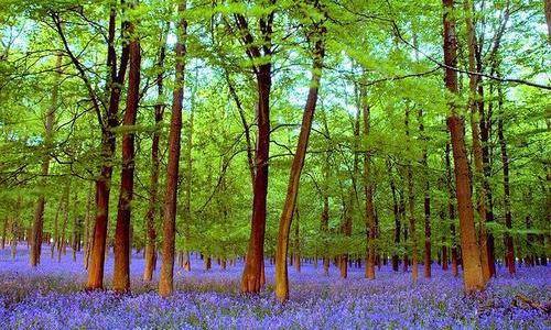 森林生態係統的自我調節