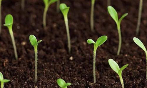 土壤也是會發育的,你知道嗎?