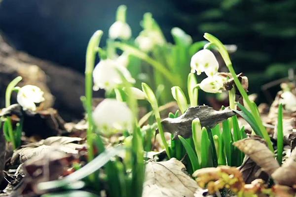 土壤中的神秘世界 走進土壤與農業可持續發展國家重點實驗室