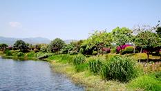 雲南石屏:異龍湖濕地美如畫卷