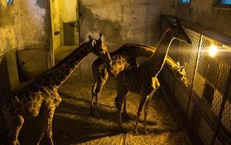 武漢動物園動物愜意過冬