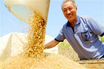 芒種時節麥收忙