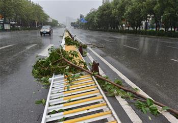 臺風影響福州市區