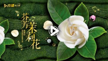第五十一集:芬芳茉莉花