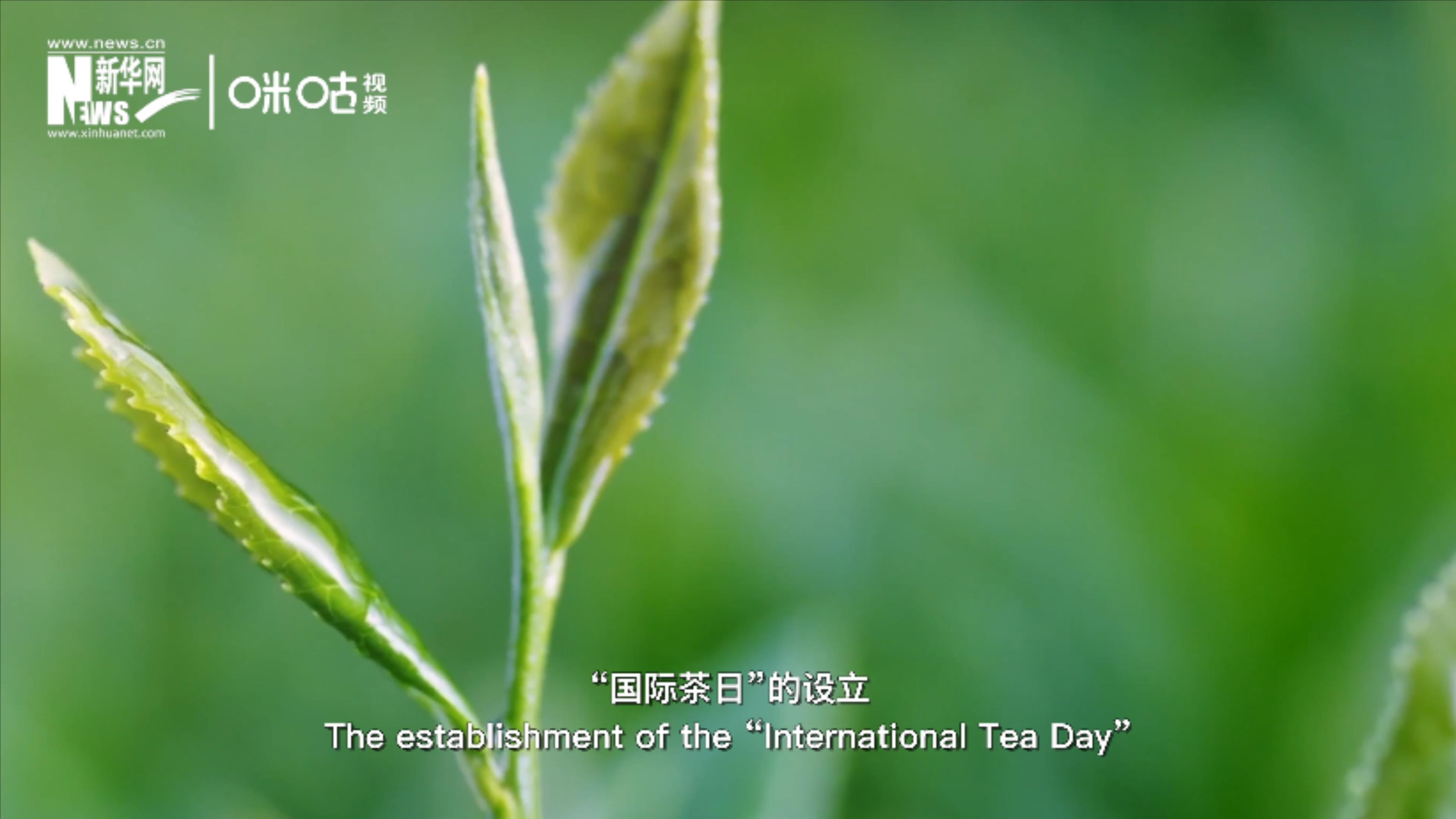 第九集:來杯茶