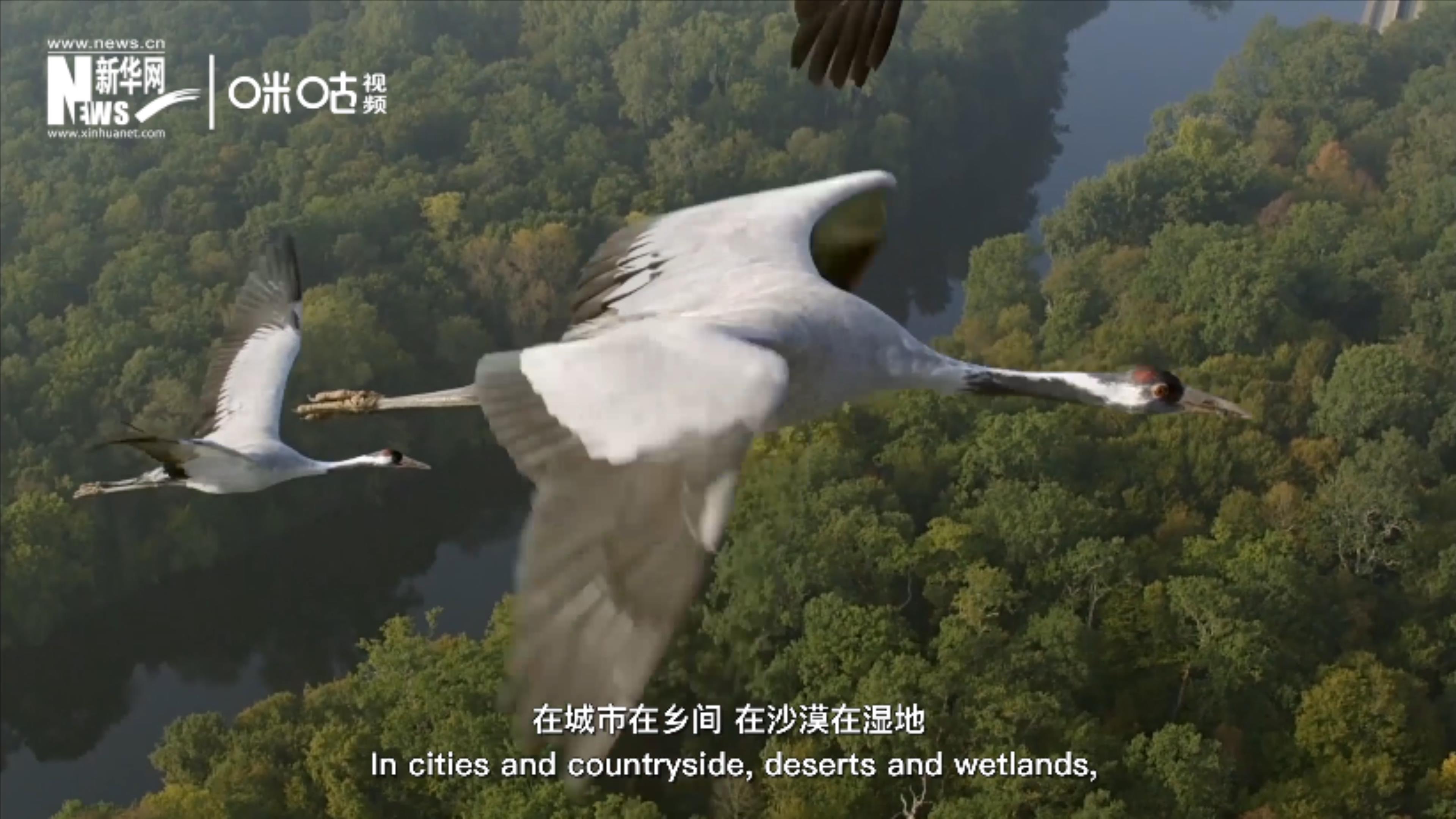 每年五月和十月的第二個星期六是世界候鳥日