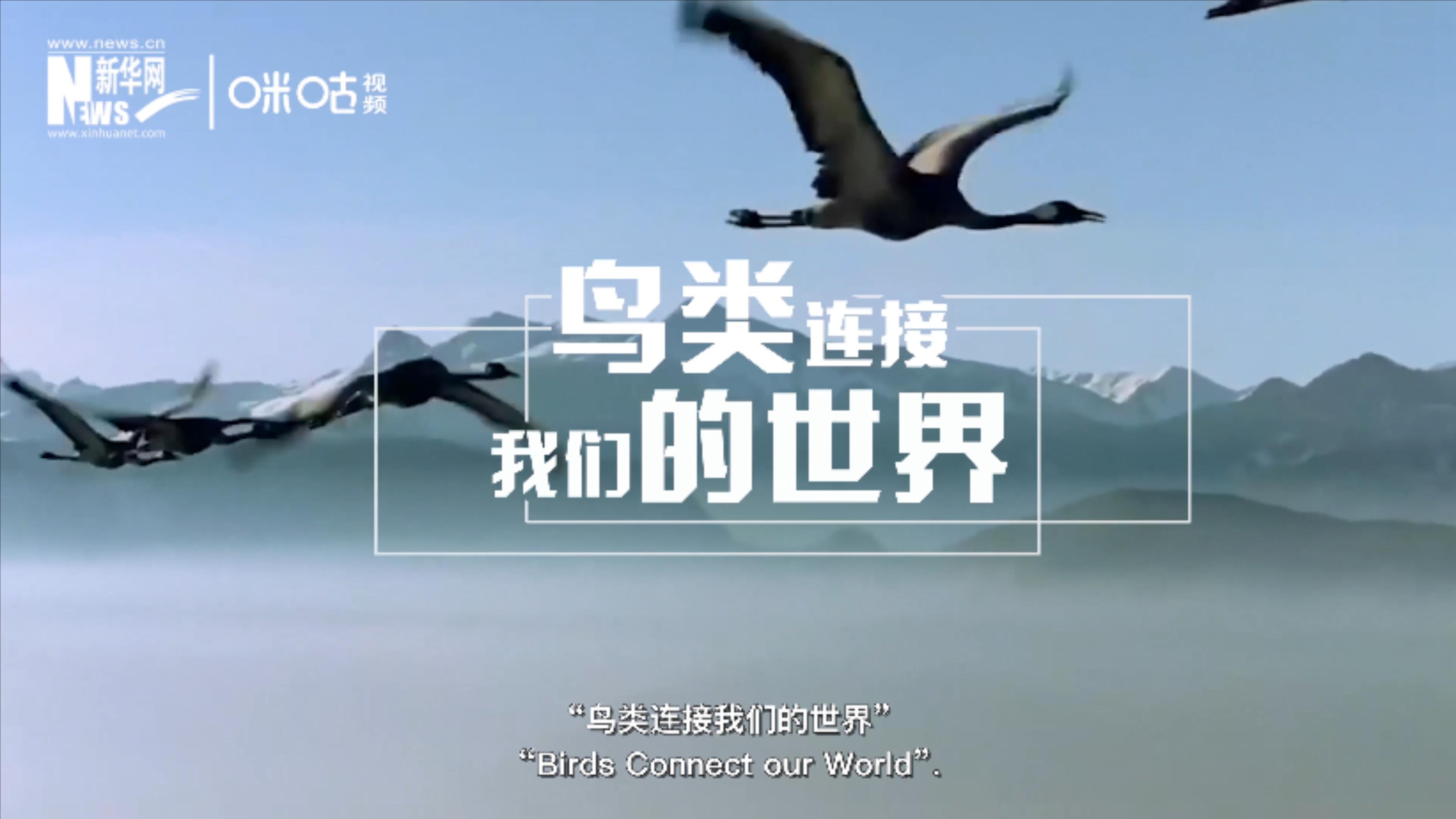 """2020年世界候鳥日的主題是""""鳥類連接我們的世界"""""""