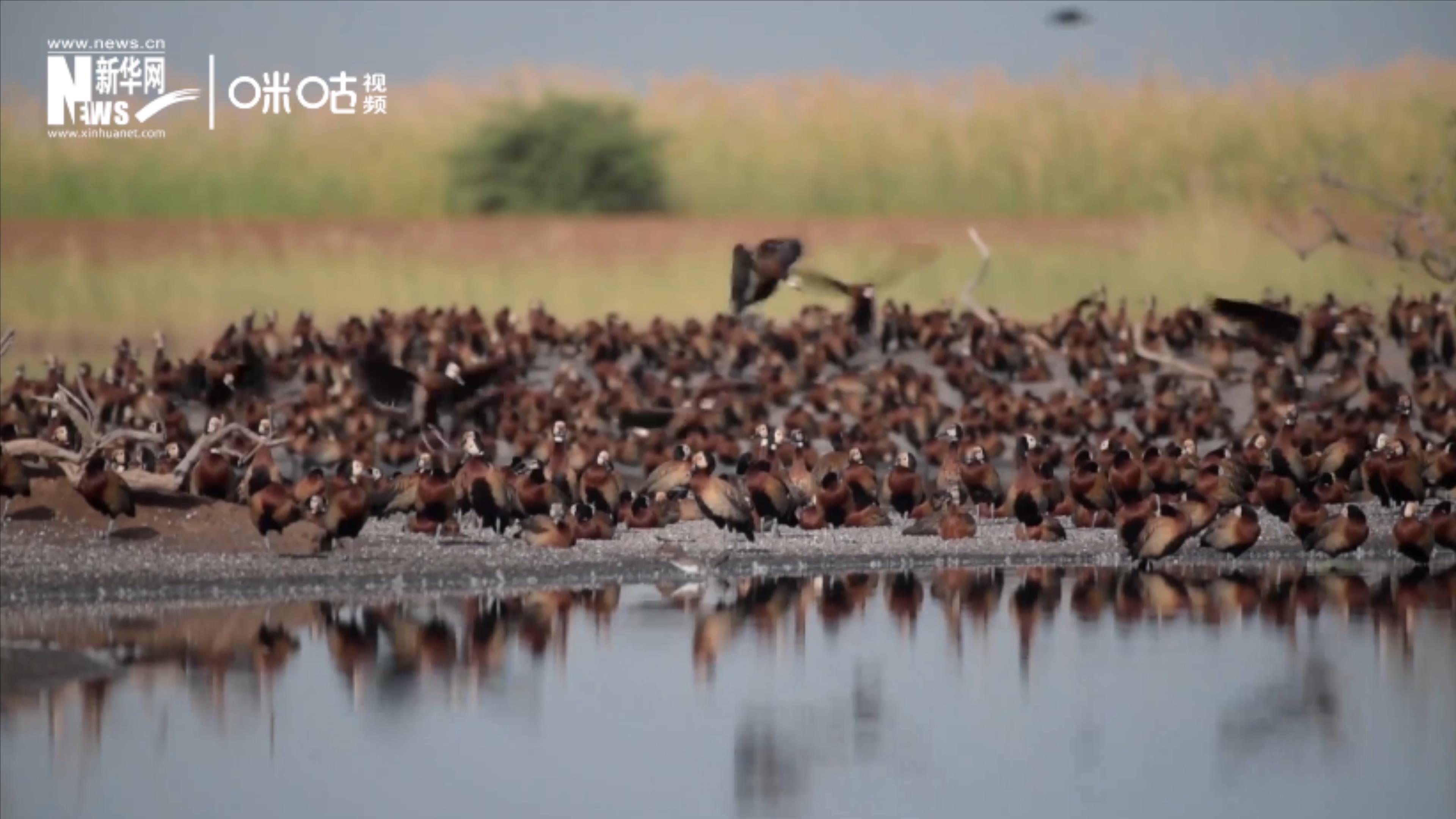候鳥將人類、生態係統和世界各國連在一起