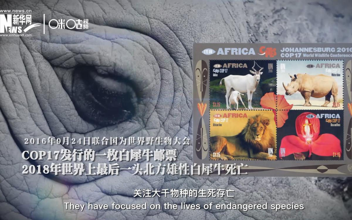 联合国发行的关注物种生存死亡的邮票