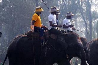 第29届国际大象马球赛在尼