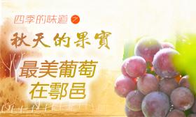 醉美葡萄在鄠邑