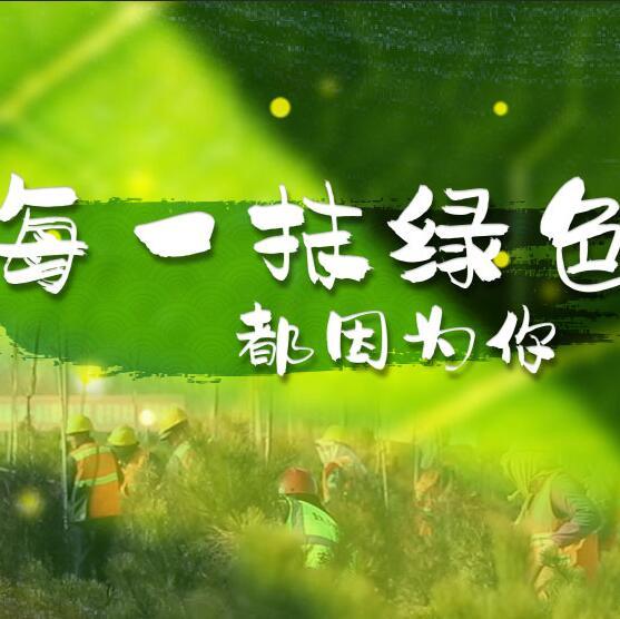 千年秀林,每一抹绿色都因为你