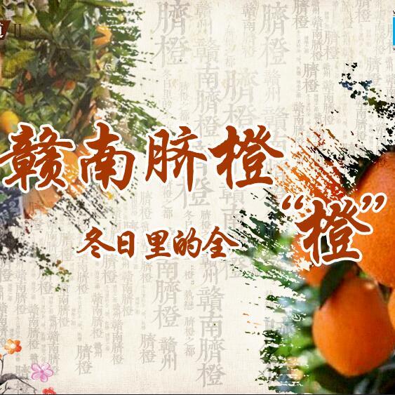 """赣南脐橙:冬日里的全""""橙""""热恋"""
