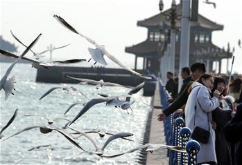 冬日棧橋觀海鷗