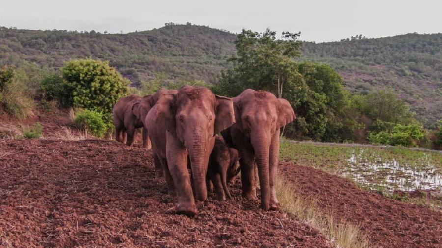 """一路""""象""""北,千百万年来发生过这么多回"""