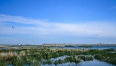 新疆呼圖壁荒山變綠洲 水鳥不斷增多