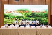 八馬茶業:踐行社會責任助力安溪秋茶産銷