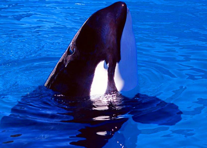 蓝鲸高清图片素材